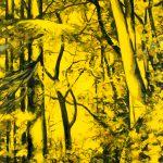 arbres-10-100x180cm-2013