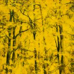 arbres-12-100x100cm-2014